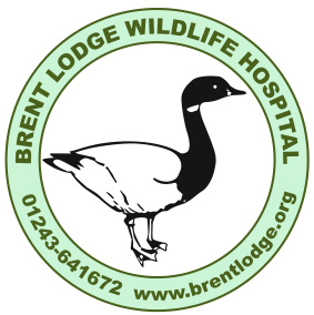 Brent Lodge logo colour